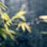 the rain in bamboo forest :: Sofia Rakitskaia