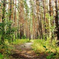 Тропинка в лесу. :: Валентина Домашкина