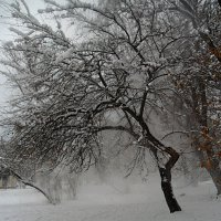Налетела зимушка! :: Наталья