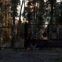 Ходи, смотри, радуйся ей – дороге! :: Ирина Данилова