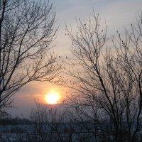 Зимне солнце :: Вера Андреева
