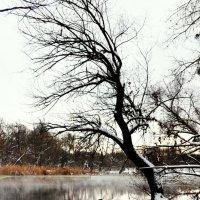 речка лодка дерево :: Владимир Иванов