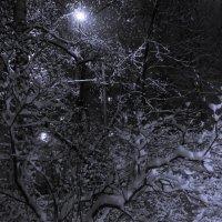 Наконец-то снег в Москве :: Сергей Афонин