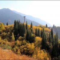 Золото деревьев как костёр. :: Anna Gornostayeva