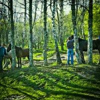 По коням??? :: Yoris2012 Lp.,by >hbq/