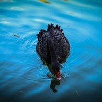 Фотопрогулка в Адлер. :: Nonna
