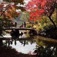 В токийском парке Рикугиен :: Sofia Rakitskaia