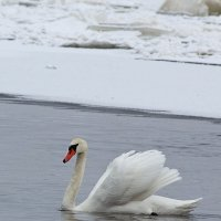 Позирует, несмотря на мороз :: Ирина Приходько