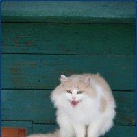 Сы-ы-ы-р ! :: Святец Вячеслав