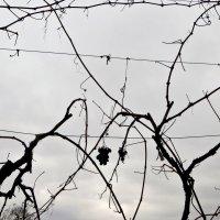 Графика зимы :: Наталья (D.Nat@lia) Джикидзе (Берёзина)