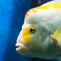 Рыбка :: Антон Мазаев