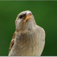 портрет :: linnud