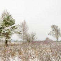 Зима :: Юрий Бичеров
