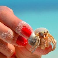 Crab :: Olga Chertanovskaya