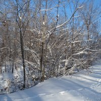 Следы на снегу... :: Тамара (st.tamara)