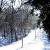 Начало декабря,дорога в парк... :: Тамара (st.tamara)
