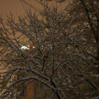 После снегопада... :: марк