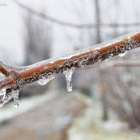 Ледяная осень :: Инна - Lasso - Ленкевич