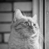 Кошачьи мечты :: Elena Ignatova