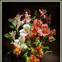 Альстромерия - перуанская лилия. :: Anna Gornostayeva