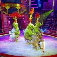 Слоны на арене цирка :: Валерий Судачок