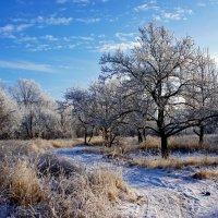 Зимний пейзаж :: Надежда Петрова