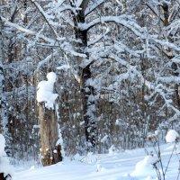 На краю заросшего парка :: Валерий Талашов