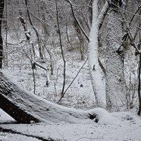 Зимовий ліс :: Степан Карачко