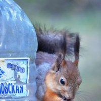 ...И орешки всё грызёт. :: Виктор Евстратов