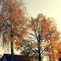 золотая осень :: Елена Протас