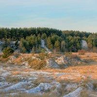 Утро около леса :: Юрий Стародубцев