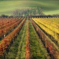 / The Wine Line / :: Влад Соколовский