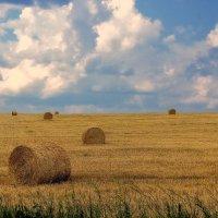 Убранное поле... :: марк