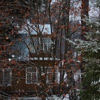Первый снег за окном :: Татьяна Нижаде