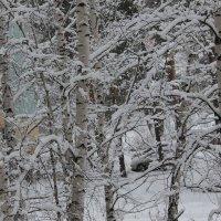 Снежное одеяние :: Олег Афанасьевич Сергеев