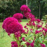 Цветок :: grovs