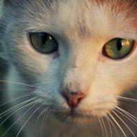 глаза :: Анастасия Бессарабова