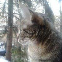 Плюшка. :: Елена Анисимова