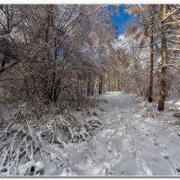 Первый снег :: Сергей Бережко