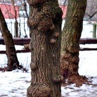 Деревья тоже болеют :: Сергей F
