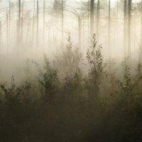 Осеннее утро, туманное.... :: Юрий Цыплятников