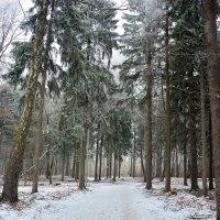 зимний лес :: Виталий Прокопчук