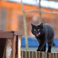 Покорми кота :: Pavel Stolyar