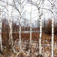 В ожидании снега :: Татьяна Нижаде