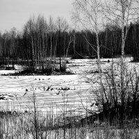Зимняя спячка :: Татьяна Нижаде