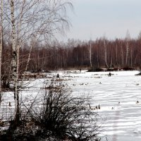 На озере :: Татьяна Нижаде