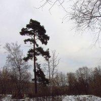 IMG_7428 - Когда снимать нечего :: Андрей Лукьянов