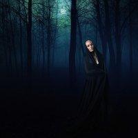 темный лес :: Сергей Кириченко