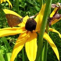 Жизнь в желтых цветах...4 :: Natali
