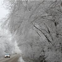 Дорога по зимнему туману... :: Тамара (st.tamara)